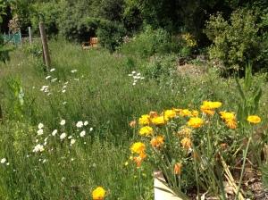 The wild flora